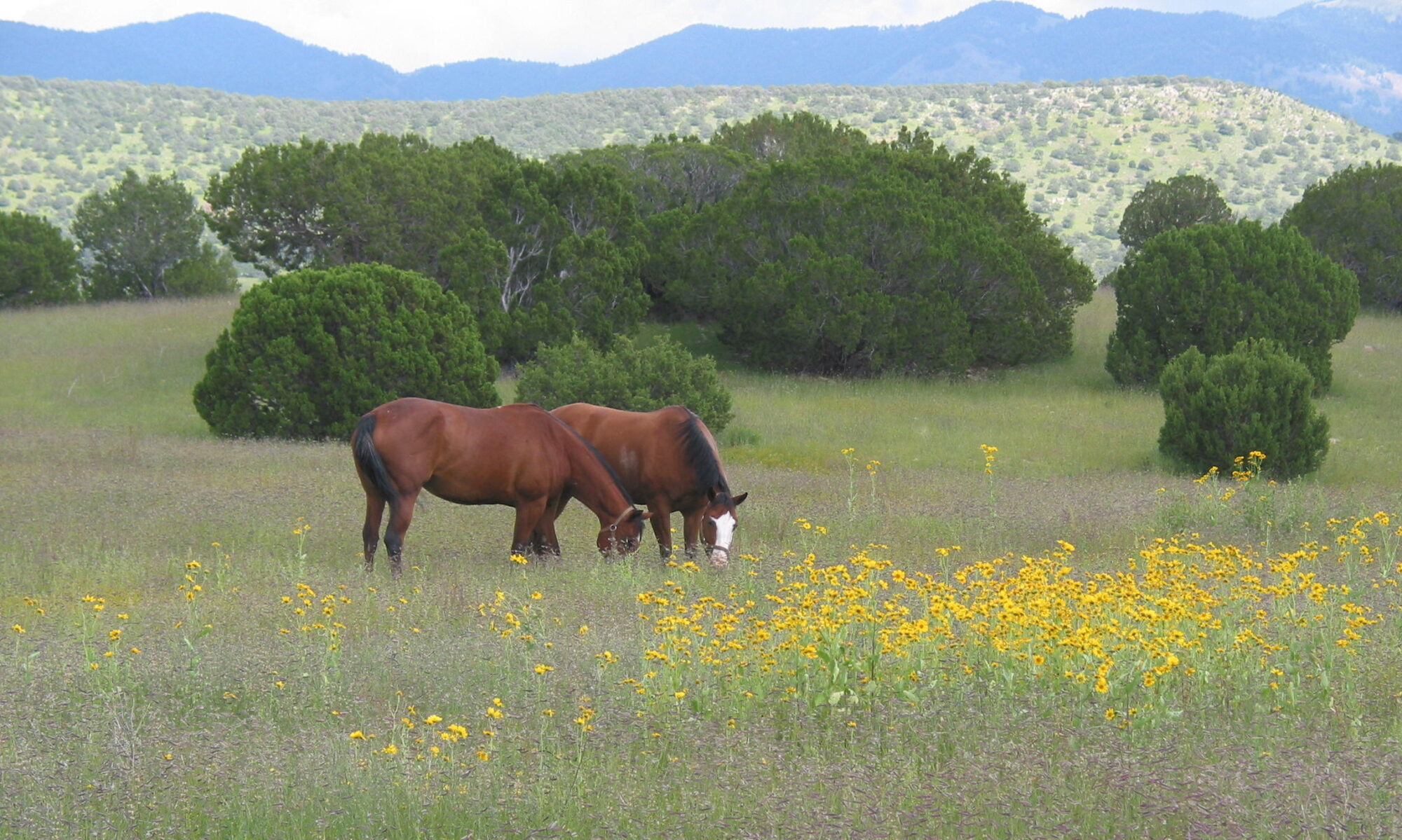 Dunhill Ranch